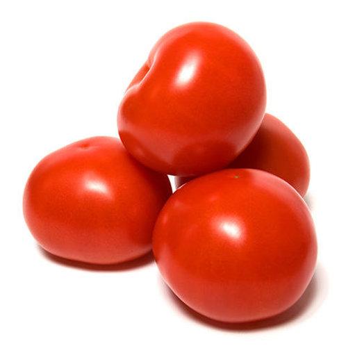 6x6 Tomato (1lb)