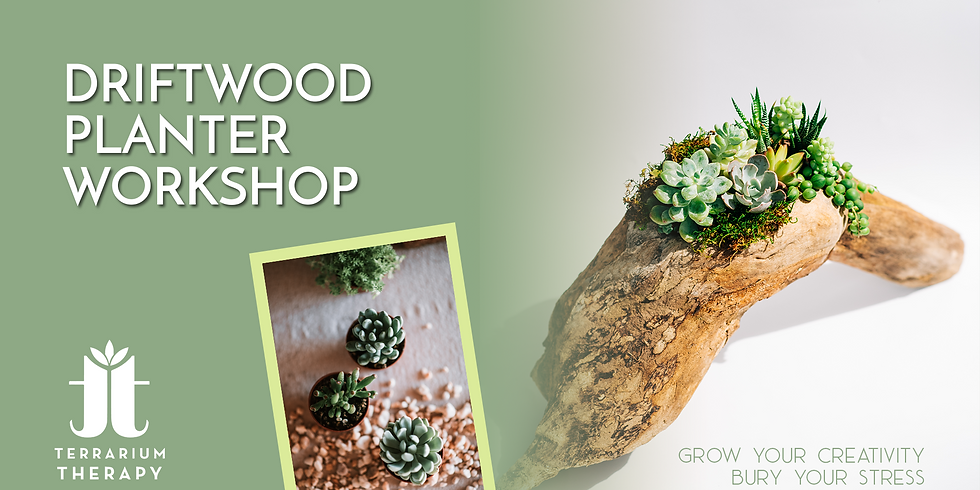 In-Person Driftwood Planter Workshop at Hershey Public Library
