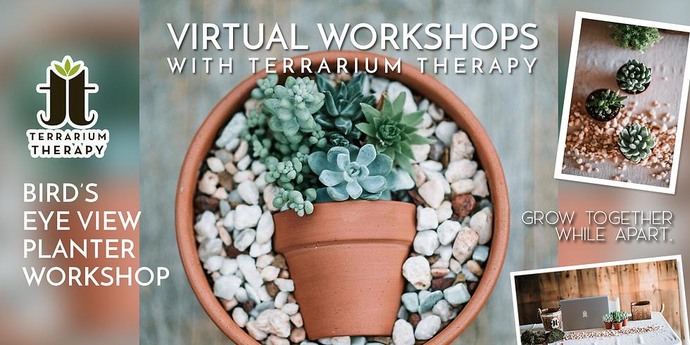 Public Virtual Workshop - Bird's Eye View Planter with Succulents