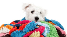 Tips on keeping your dog warm in cold weather.