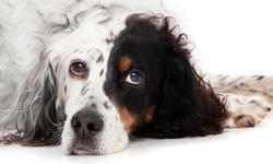 04-Pets-Dog-Black-White-Philip-Murray-Photography-Dublin