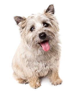 08-Pets-Dog-Grey-Happy-Tongue-Philip-Murray-Photography-Dublin