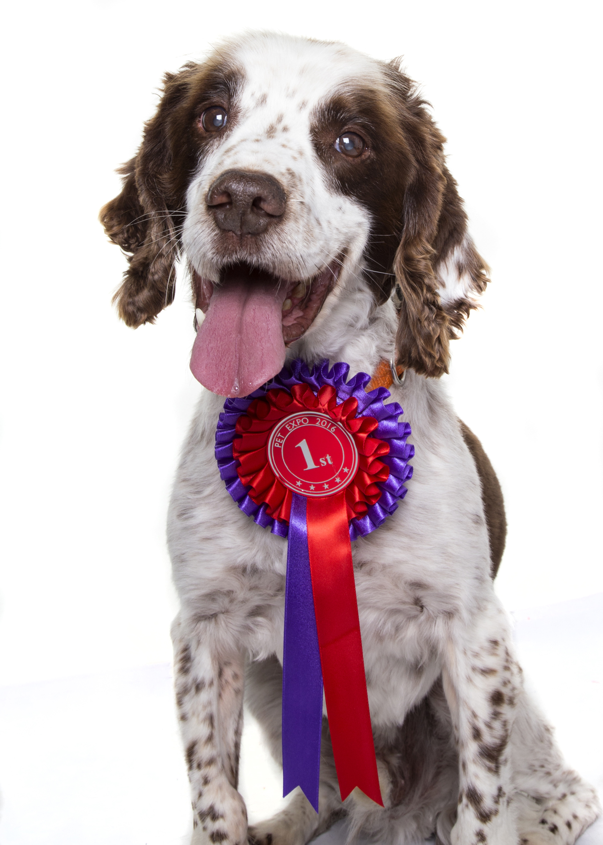 Pet Dog Turk Philip Murray Photography Dublin