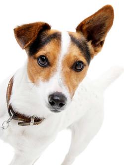 01-Pets-Dog-Cute-Ears-Philip-Murray-Photography-Dublin