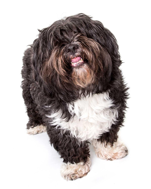 12-Pets-Dog-Black-Hairy-Philip-Murray-Photography-Dublin