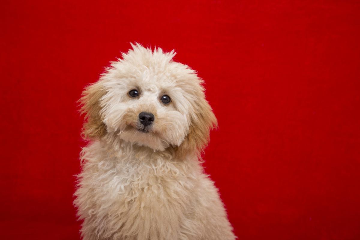 Pet Home Shoot Photography Dublin