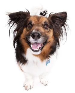 13-Pets-Dog-Black-Brown-Happy-Philip-Murray-Photography-Dublin