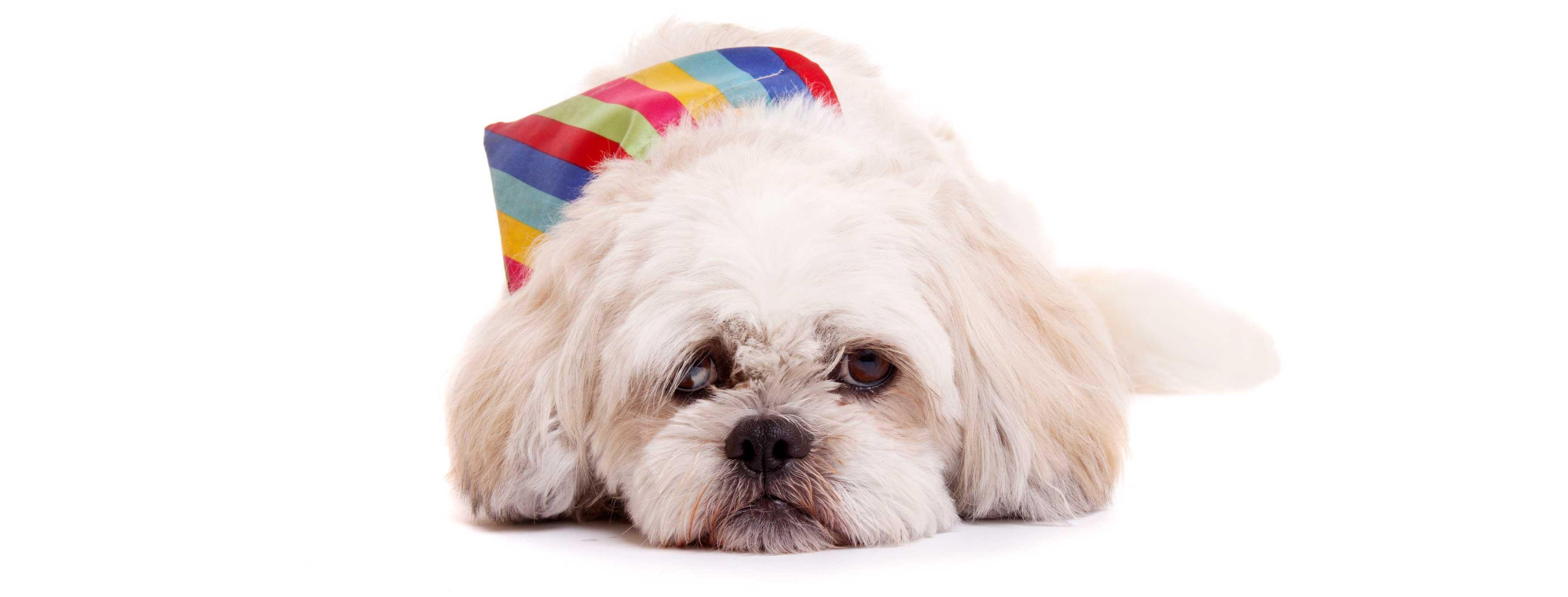 07-Pets-Dog-White-Colour-Collar-Philip-Murray-Photography-Dublin
