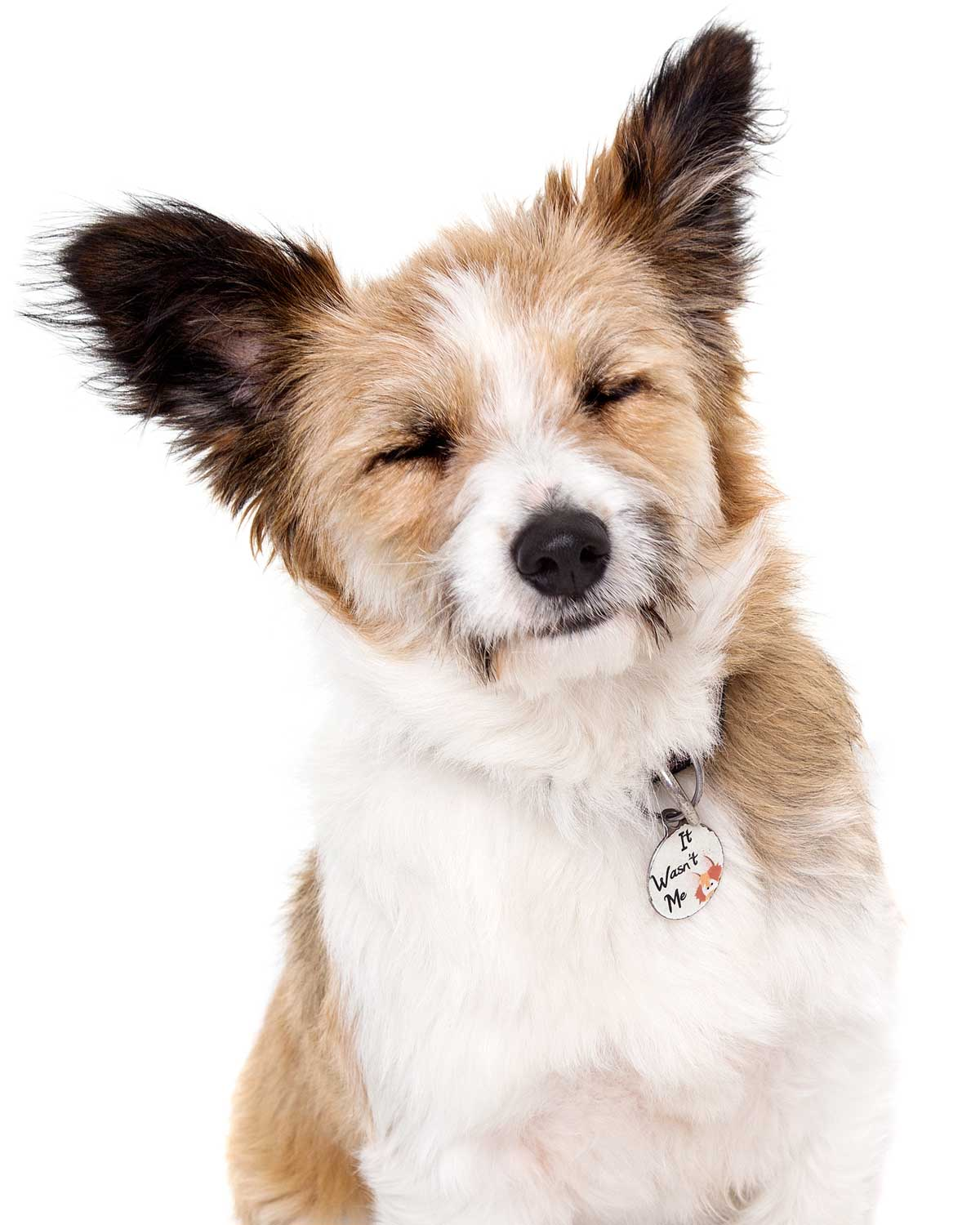 14-Pets-Dog-Brown-White-Eyes-Closed-Tired-Philip-Murray-Photography-Dublin