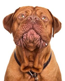 Pet DogHome Shoot Photography Dublin