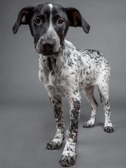 Pets-Shoot-Dog-Puppy-Black-White-Standing-Philip-Murray-Photography-Dublin.jpg