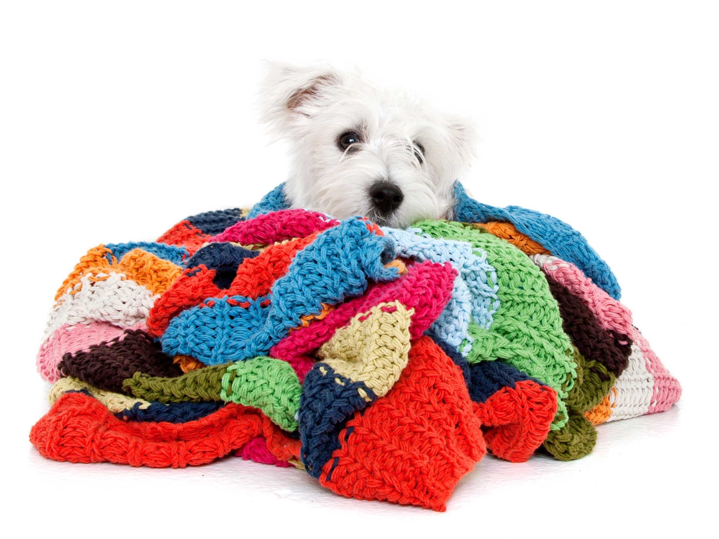 10-Pets-Dog-White-Colours-Comfort-Bed-Philip-Murray-Photography-Dublin