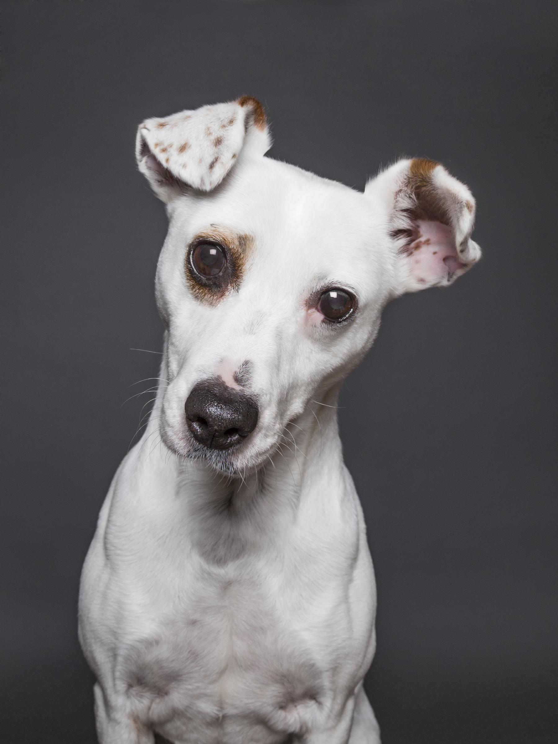 Pet Dog Photography Charlie Philip Murray Photography Dublin B