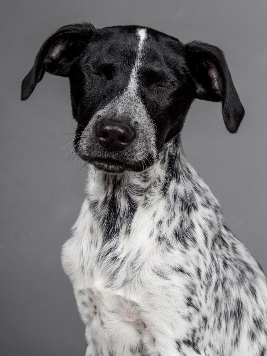 Pets-Shoot-Dog-Puppy-Black-White-Eyes-Closed-Philip-Murray-Photography-Dublin.jpg