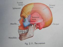 Workshop Cranio Sacraal