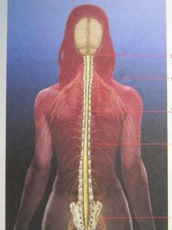 Cranio Sacraal Behandeling