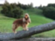 Winehill koker (1).jpg