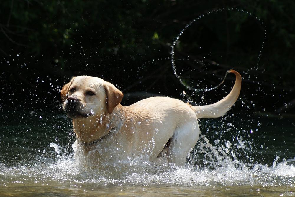 Pes dokazano pozitivno  vpliva  na družinske  odnose, saj je kot neke vrste terapevt