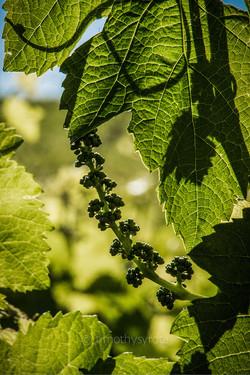 Gr Winemakers-5