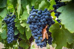 Gr Winemakers-15