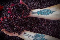 Gr Winemakers-2