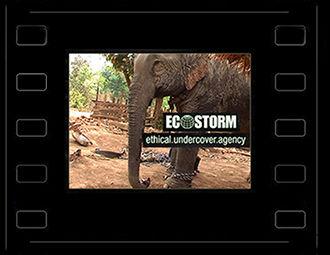 10 Ecostorm.jpg