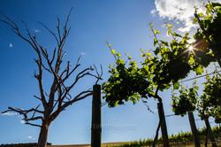 Gr Winemakers-13
