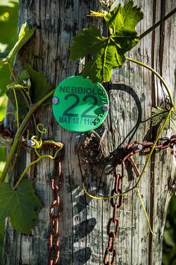 Gr Winemakers-12