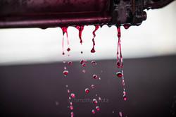 Gr Winemakers-16