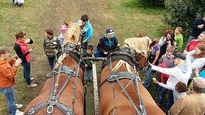 horses group.jpg
