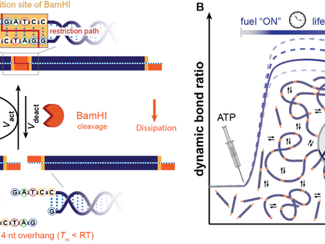 Programmable dynamic steady states in ATP-driven nonequilibrium DNA systems