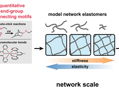 Bottom-up Design of Model Network Elastomers and Hydrogels from Precise Star Polymers