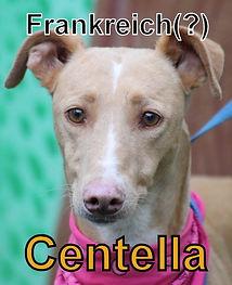 Centella-new.JPG