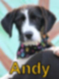 Andy.JPG