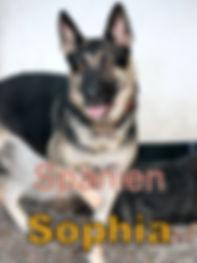 Sophia-new.JPG
