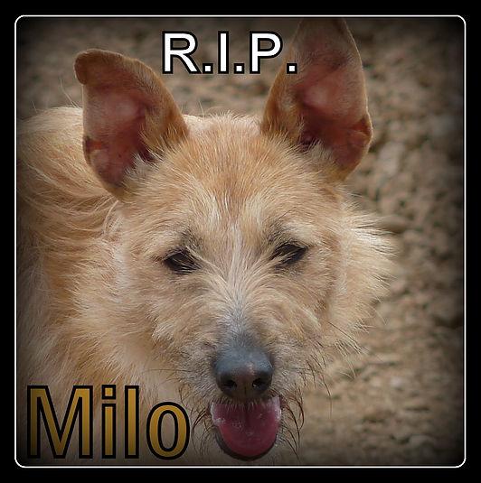 Milo.jpg