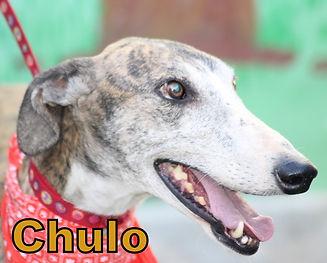 Chulo.JPG