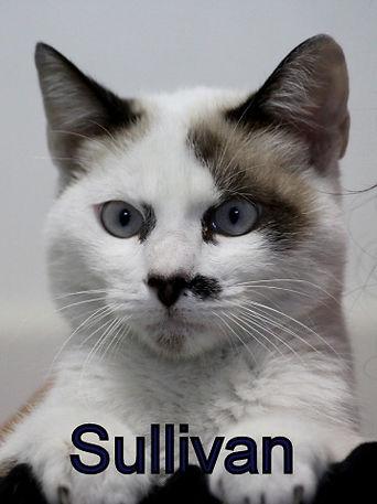 Sullivan.JPG