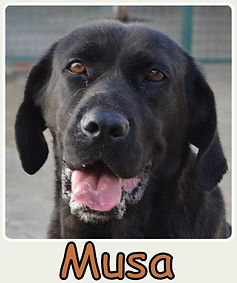 Musa-new.jpg