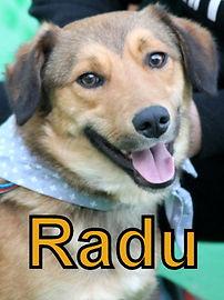 Radu.JPG
