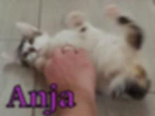 Anja.jpg