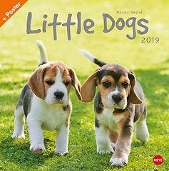 little dogs.jpg