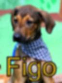 Figo.JPG