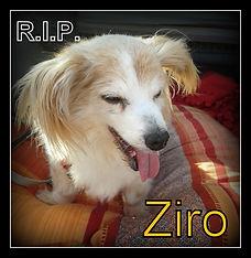 Ziro.jpg