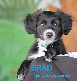 Brad.png