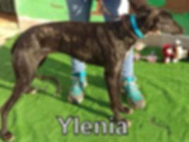 Ylenia.jpg