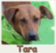 Tara-new.jpg