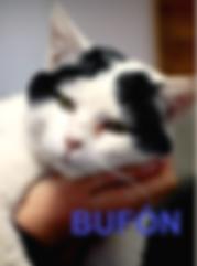 BUFÓN (1).png