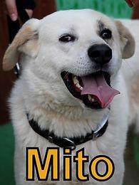 Mito.JPG