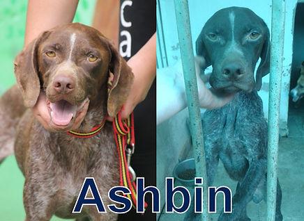 Ashbin-Okto.jpg
